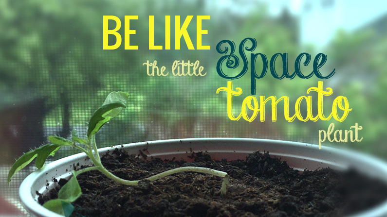 Be Like the Little Space Tomato