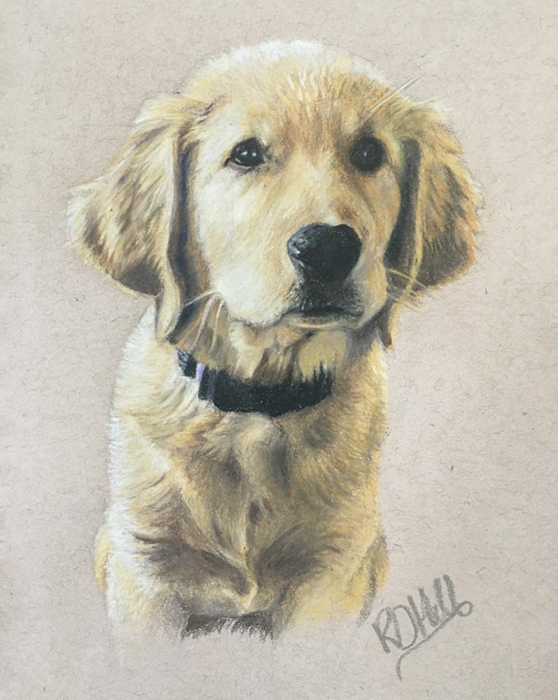 golden retriever dog portraits by Glowbug Design, Truro Nova Scotia