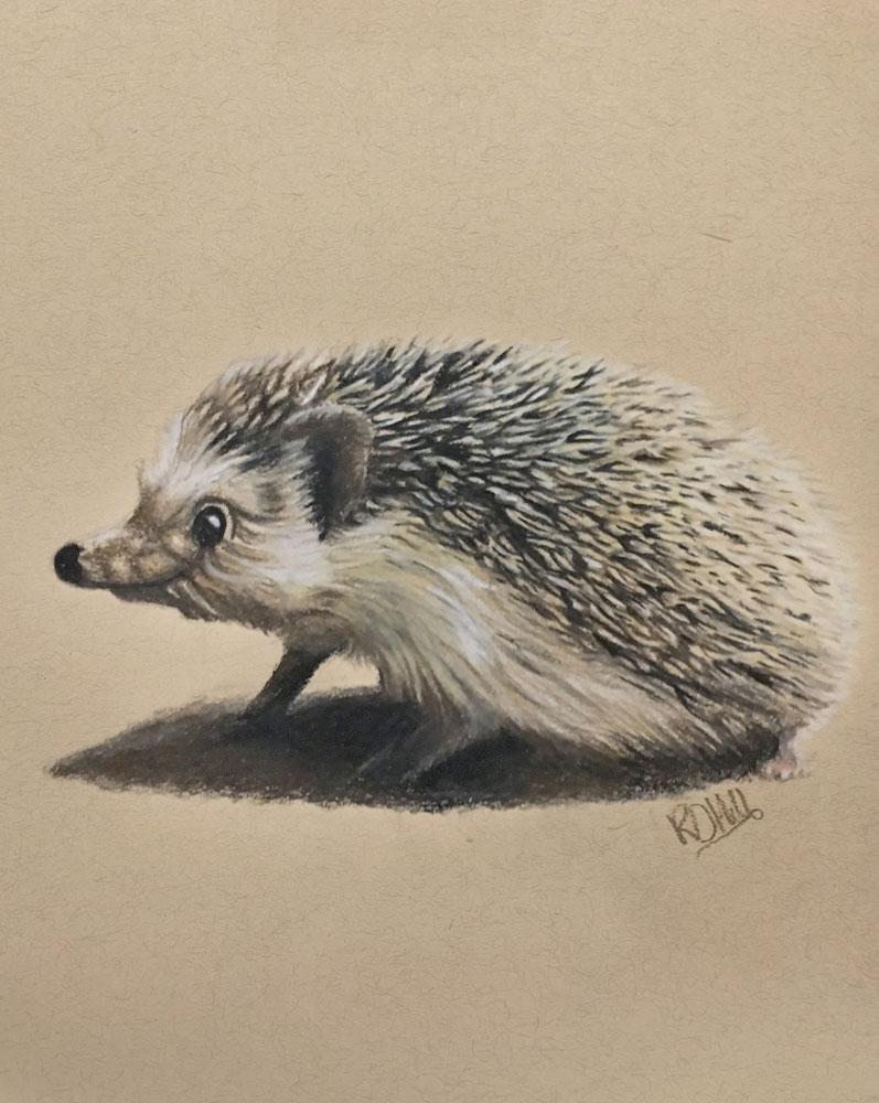 hedgehog pet portrait drawing, Truro Portrait artist illustrator