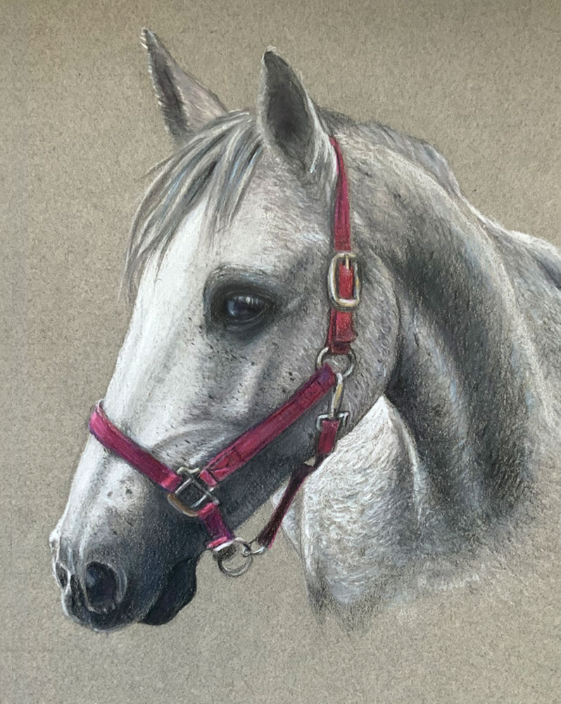Horse portrait drawing, Truro Portrait artist illustrator